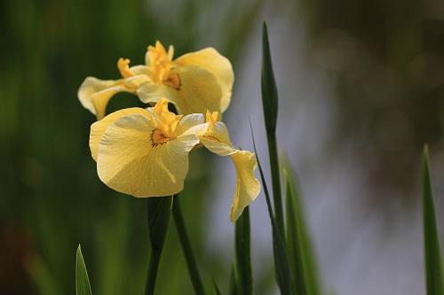 1 黄色.JPG