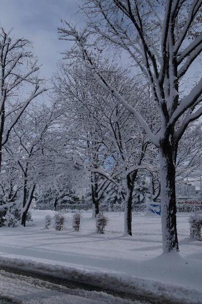 冬の出現.JPG