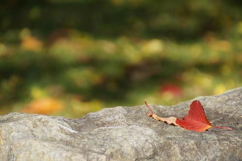 秋も終わり始め.JPG
