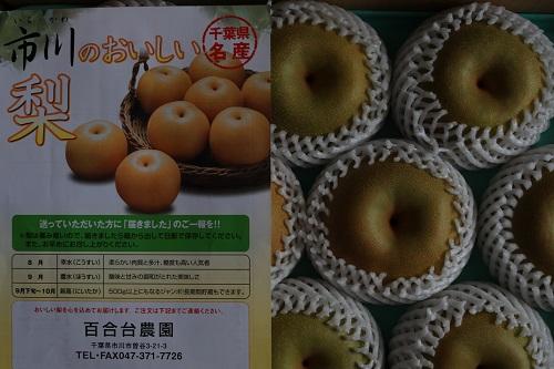 市川のおいしい梨.JPG